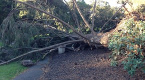 Major winds uproot Piedmont Park trees